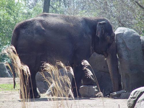 Elephant stuck among stones